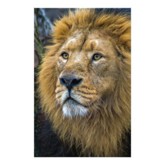 Majestic lion stationery design