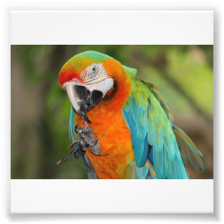 Majestic Macaw Photo Print