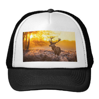 Majestic Male Deer With Antlers Mesh Hat