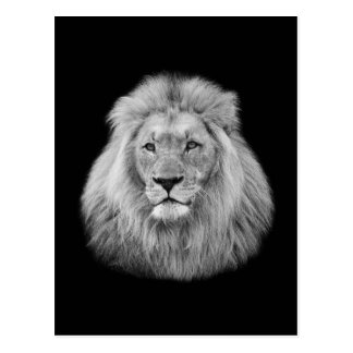 Majestic male lion black and white photo postcard