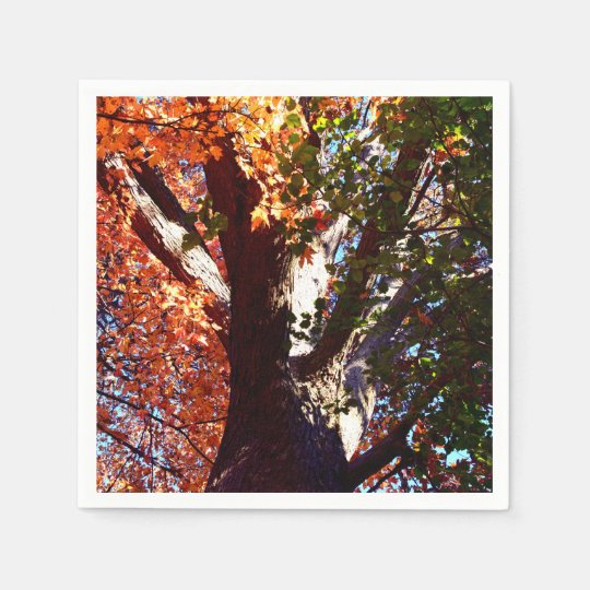 Majestic Maple tree - first signs of Autumn