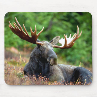 Majestic Moose Meadow Mouse Mat