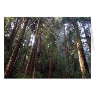 Majestic Muir Woods Card