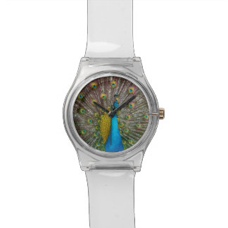 Majestic Peacock with Royal Plumage on Display Wrist Watches
