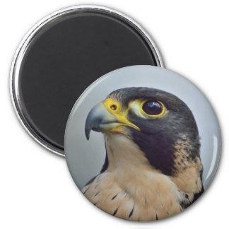 Majestic Peregrine falcon 6 Cm Round Magnet