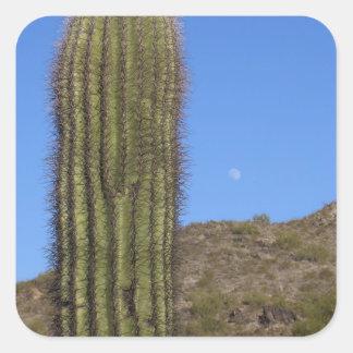 Majestic Saguaros (1) Stickers