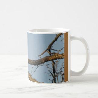 Majestic Sharp Shinned Hawk Mug