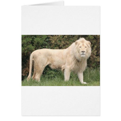Majestic White Lion Greeting Cards