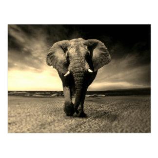 Majestic Wild Bull Elephant in Sepia Postcard