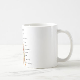 Major Internal Organs in the Human Body Chart Coffee Mugs