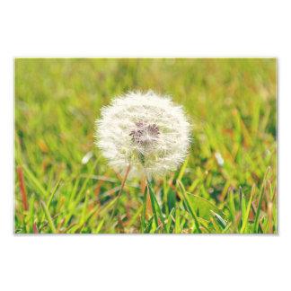 Make a wish photo
