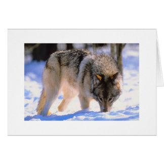 Make Christmas Card Winter Snow Wolf