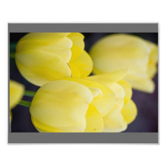make your own photo prints--TULIPS