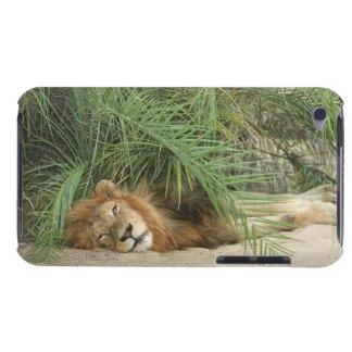Mala Mala Reserve, Mpumalanga Province, South Case-Mate iPod Touch Case