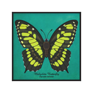 Malachite Butterfly Canvas Print