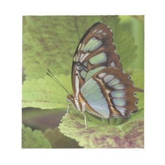 Malachite butterfly (Metamorpha stelenes) Notepad