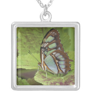 Malachite butterfly (Metamorpha stelenes) Silver Plated Necklace
