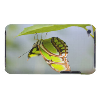 Malachite butterfly on leaf iPod Case-Mate case