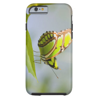 Malachite butterfly on leaf tough iPhone 6 case
