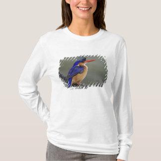 Malachite Kingfisher, Alcedo cristata, Lake T-Shirt