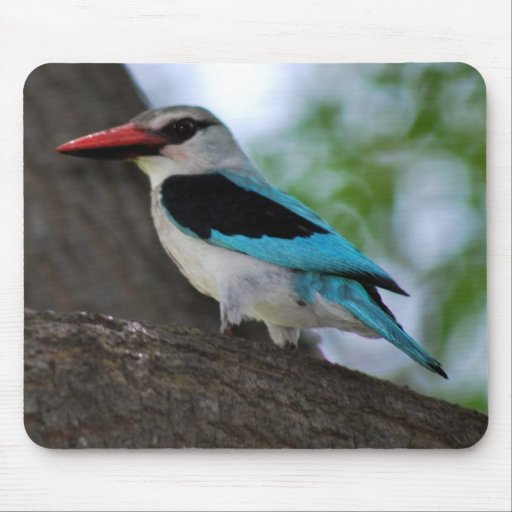 Malachite Kingfisher Mousepad