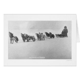 Malamute Chorus Alaska 1920 Cards