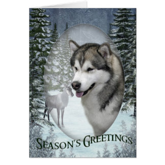 Malamute Christmas Card