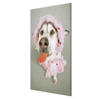 Malamute Dog Wearing a Tutu and Sticking Out Canvas Print