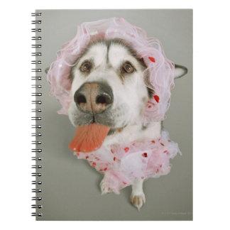 Malamute Dog Wearing a Tutu and Sticking Out Spiral Notebook