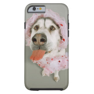 Malamute Dog Wearing a Tutu and Sticking Out Tough iPhone 6 Case