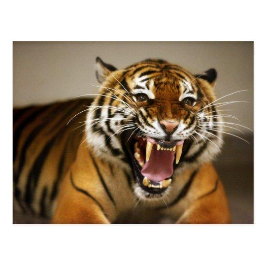 Malayan Tiger #2 postcard