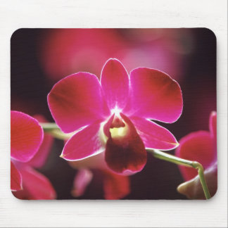 Malaysia, Orchid Mouse Mat