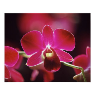 Malaysia, Orchid Poster
