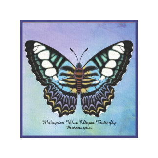 Malaysian Blue Clipper Butterfly Canvas Print