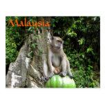 Malaysian Monkey Postcard
