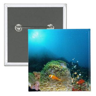 Maldives Anemone fish swimming underwater 15 Cm Square Badge
