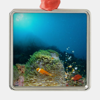 Maldives Anemone fish swimming underwater Christmas Ornament