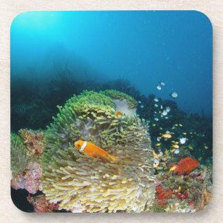 Maldives Anemone fish swimming underwater Coasters