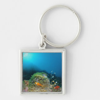 Maldives Anemone fish swimming underwater Silver-Colored Square Key Ring