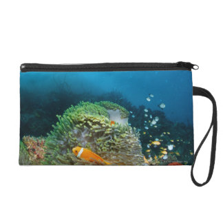 Maldives Anemone fish swimming underwater Wristlet