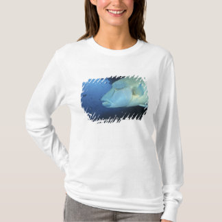 Maldives, Napoleanfish Chelinus undulatus) T-Shirt