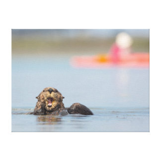 Male adult sea otter in Elkhorn Slough, California Canvas Prints