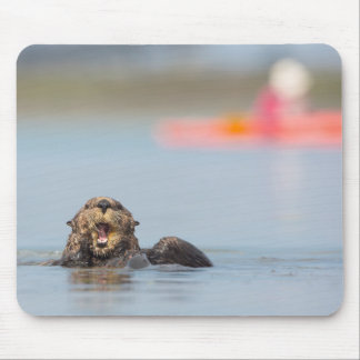 Male adult sea otter in Elkhorn Slough, California Mouse Mat
