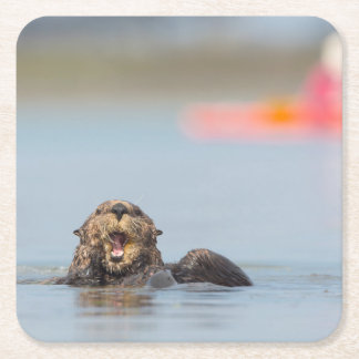 Male adult sea otter in Elkhorn Slough, California Square Paper Coaster