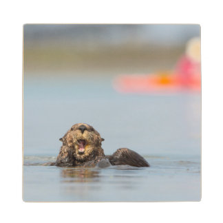 Male adult sea otter in Elkhorn Slough, California Wood Coaster