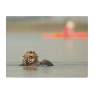 Male adult sea otter in Elkhorn Slough, California Wood Canvases