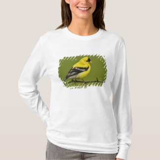Male American Goldfinch in breeding plumage, T-Shirt