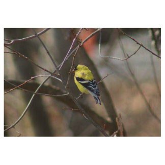 Male American Goldfinch Wood Poster