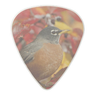 Male American Robin in Black Hawthorn 2 Acetal Guitar Pick