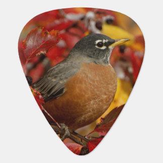 Male American Robin in Black Hawthorn 2 Pick
